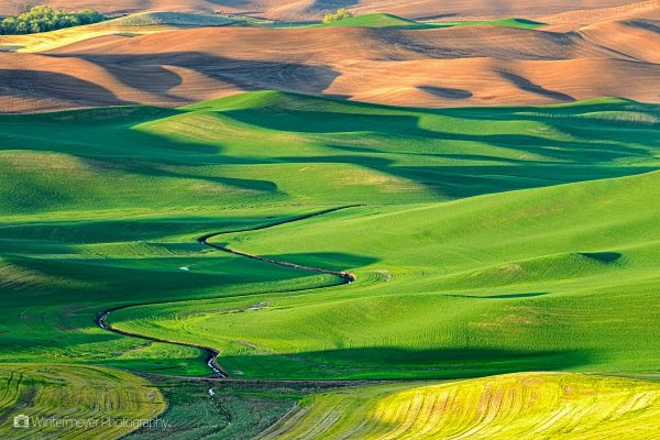 Palouse fields form a patchwork of color every spring.